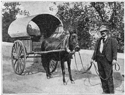 Het in Algarvië meest gebruikte voertuig.